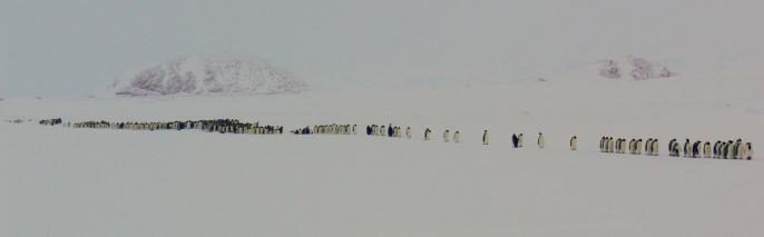 14 juillet pingouin 2