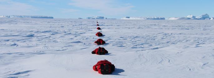 Cercle polaire hivernants