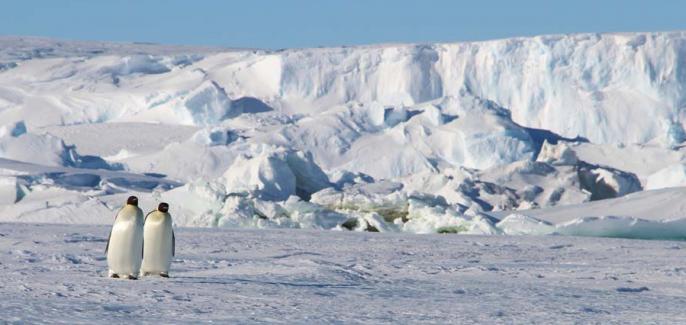 Empereurs devant le glacier